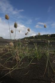 bethells_grass