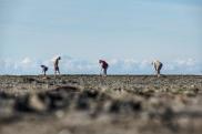 diggingfordinner