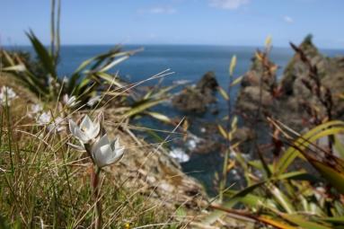 NZ--tawharanui-regional-2