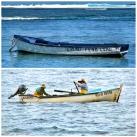 la-reunion-boats