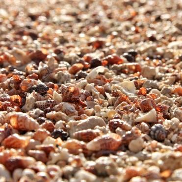 new-caledonia-beach-shells