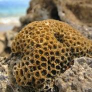 new-caledonia-coral