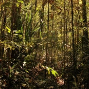 new-caledonia-forest