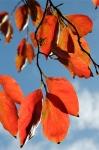 newzealand-autumn20