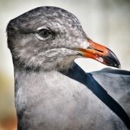 usa-birdlife