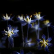 violet-flower-bokeh