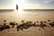 Glenelg Beach, SA