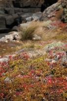Cape du Couedic, Kangaroo Island, SA