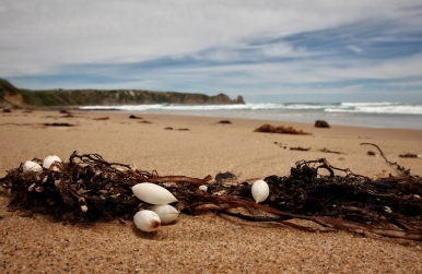 Phillip Island, Cape Woolamai, VIC