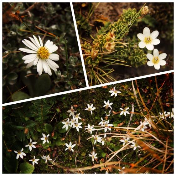 03b-mount-taranaki-flowers