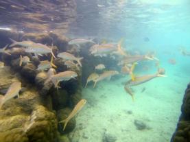 rarotonga-cookislands-swarm