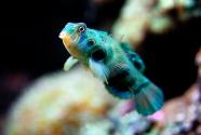 tarlton-funnyfish copy