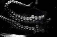 tarlton-octopus copy copy