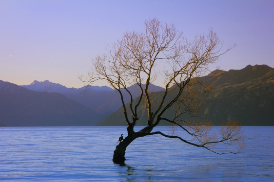 wanaka-lone-tree1
