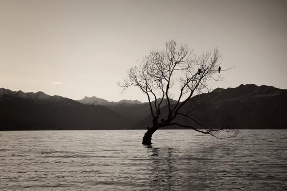 wanaka-lone-tree2