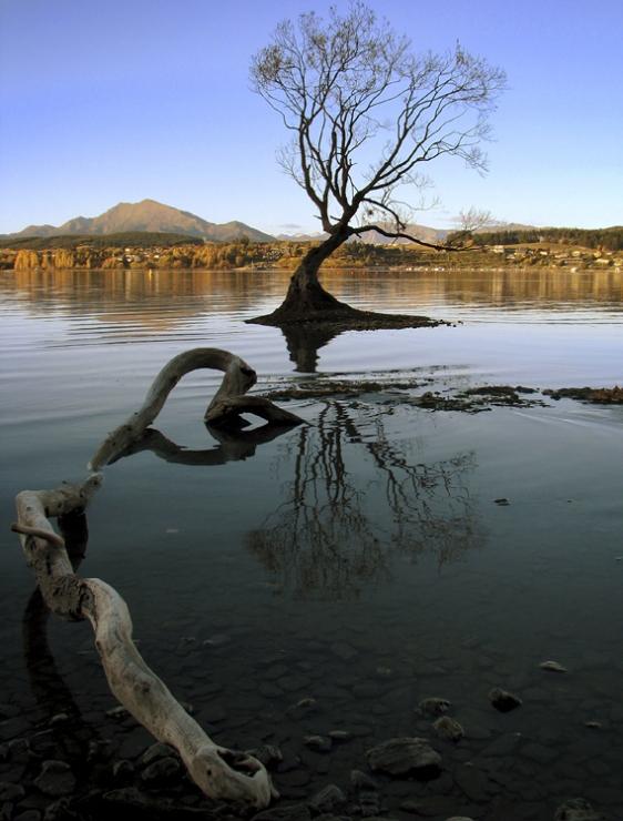 wanaka-lone-tree3
