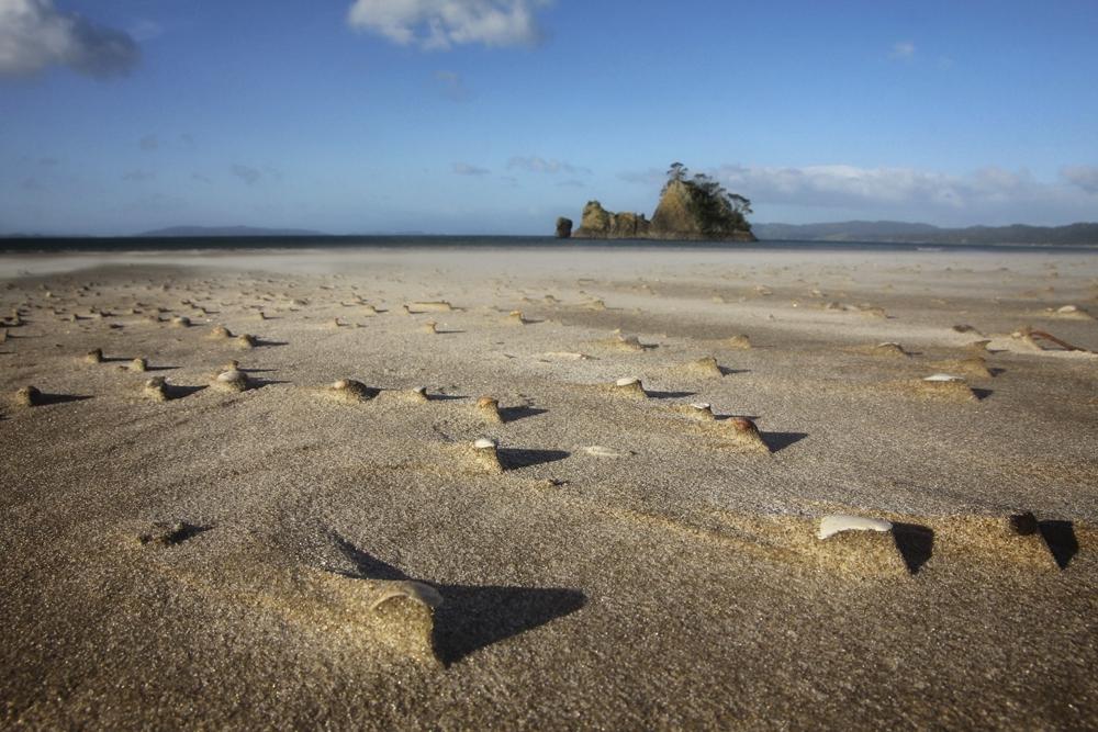 Beach shells landscapegroundshot Coromandel
