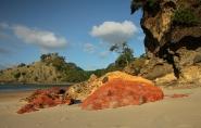 New Chums Beach, Coromandel