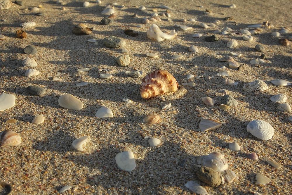 Shells on New Chums Beach