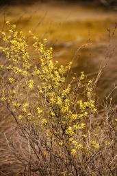 tongariro new zealand blossoms