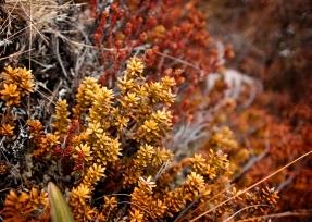 tongariro new zealand moss