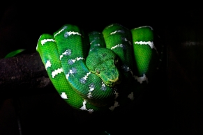 singapore zoo snake
