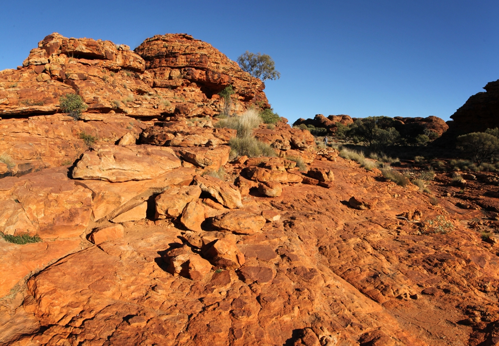 the seducer of northern australia essay