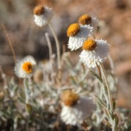 northern territory australia flora