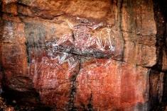 northern territory aboriginies