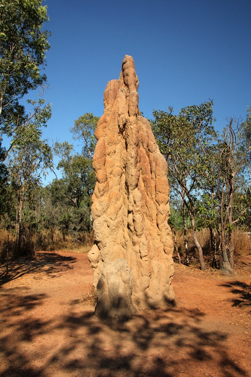 northern territory termite mound