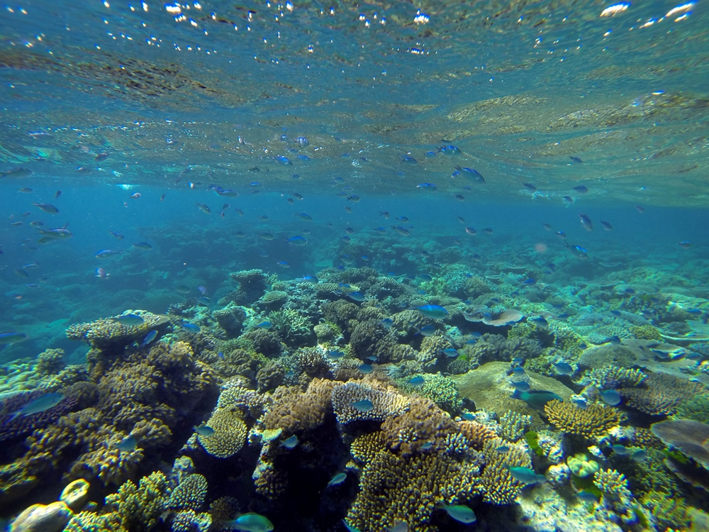 Great Barrier Reef, Cairns