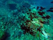 Great Barrier Reef, Cairns