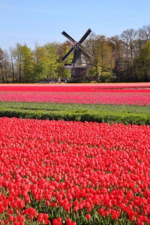keukenhof-holland-tulips11