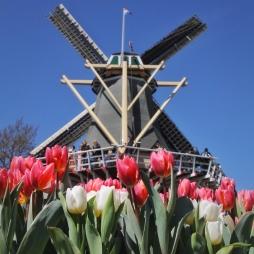 keukenhof-holland-tulips14