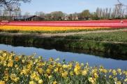 keukenhof-holland-tulips15