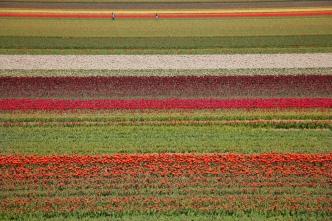 keukenhof-holland-tulips16