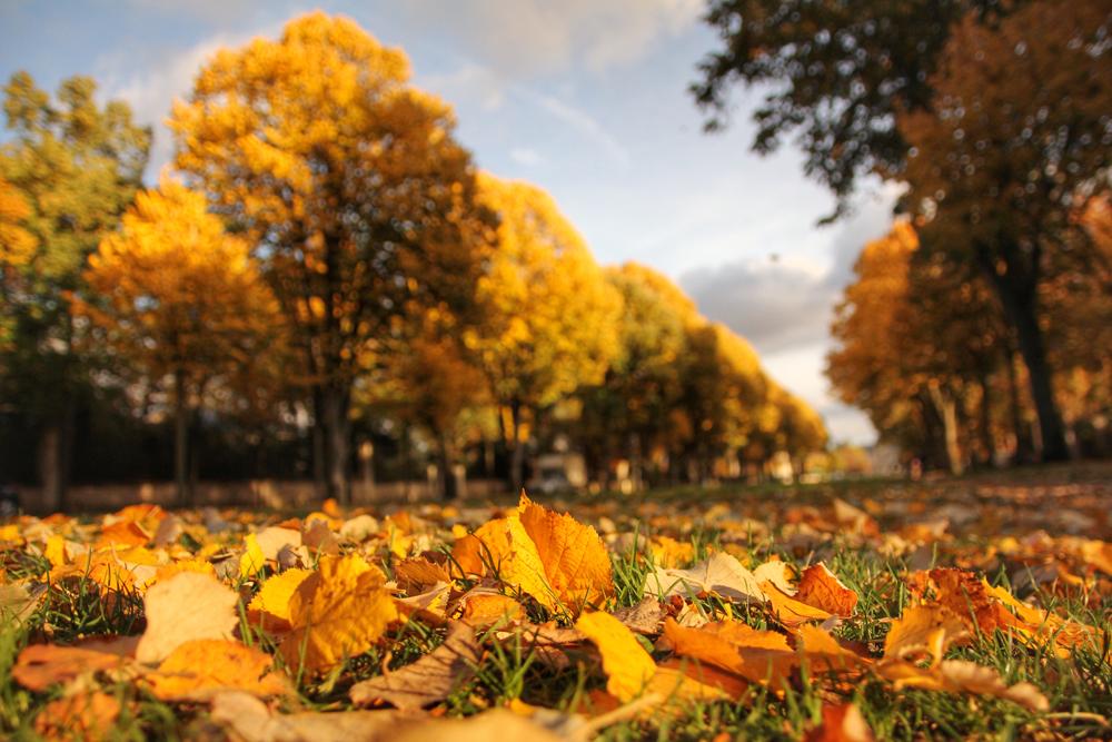 autumn-maisons-laffitte-1