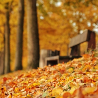 autumn-maisons-laffitte-4