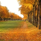 autumn-maisons-laffitte-5