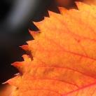autumn-maisons-laffitte-6