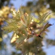 autumn-maisons-laffitte-7