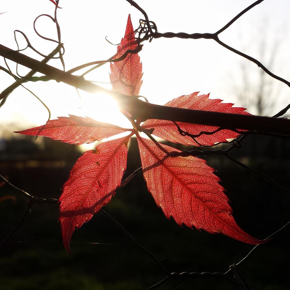 autumn-maisons-laffitte-10