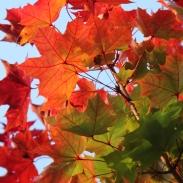 autumn-maisons-laffitte-11