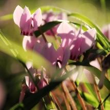 spring-maisons-laffitte-3
