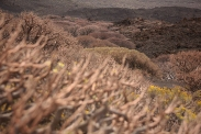 Volcanic landscape, El Hierro
