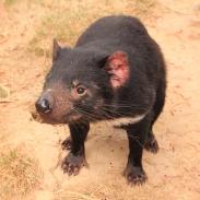 tasmania28