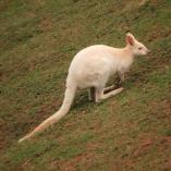 tasmania30