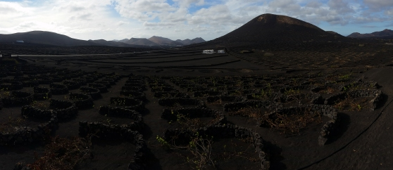 One of the most special wine regions I ever visited: La Geria in Lanzarote. Vines are growing behind crescent shaped stone walls that protect the plants from the wind.