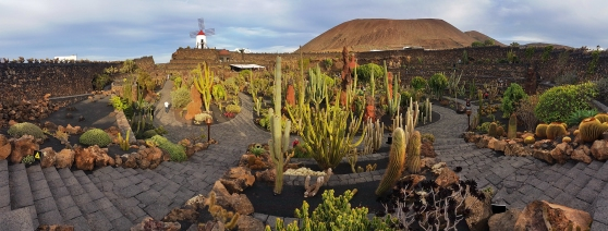 Cactus garden designed by César Manrique in Guatiza, Lanzarote. The windmill was once used to produce gofio.